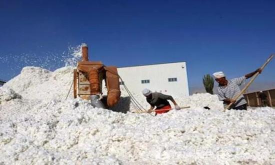 新疆棉企资金压力究竟有多大?