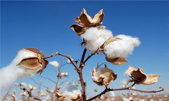 國棉自強還須全產業鏈聯手!國棉聯盟成立3年都做了什么?