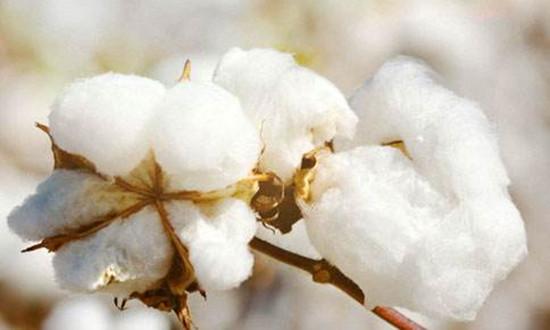 粘胶产能增加240万吨,再生涤短增加360万吨,非棉纤维需求如何演变?